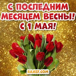 1 мая! Открытка с последним месяцем весны! Картинка с 1 мая! Красные тюльпаны!