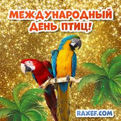 Открытка на день птиц! Картинка с попугаями! Попугаи!
