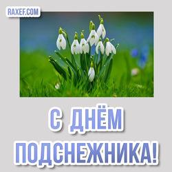 С днём подснежника! Красивая открытка, картинка с цветами! Весна пришла! Апрель!