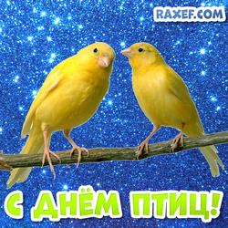 С днем птиц! Открытка на день птиц с домашними канарейками! Картинка! Канарейки!