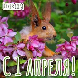 Весна! 1 апреля! С весною! Апрельские открытки, картинки! С 1 апреля! Середина весны! Красивые весенние пожелания для хорошего настроения!
