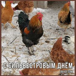 Сильвестров день, или Куриный праздник. Открытка. Картинка.