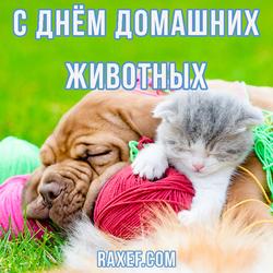 Всемирный день домашних животных. Открытка. Картинка.