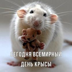 Всемирный день крысы. Открытка. Картинка.