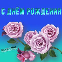 Картинка с розовыми розами! С днём рождения женщине! Розы! Открытка на синем фоне!