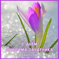 С днём Онисима Овчарника (открытка, картинка, поздравление)