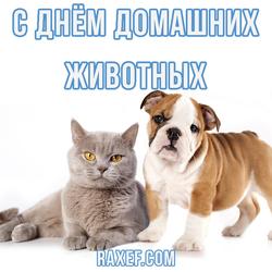 С днем домашних животных! Картинка!
