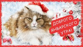 Открытка с пушистым котом. С добрым январским утром (открытка, картинка, поздравление)