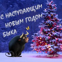 С наступающим новым годом Быка!