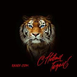 С новым годом 2022! Картинка! Открытка с новым годом тигра! Красивая картинка с тигром!