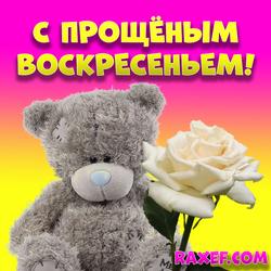 Картинка на прощёное воскресенье! С прощёным воскресеньем! Картинка с мишкой Тедди и белой розой!...