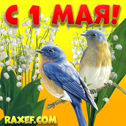 С 1 мая! Картинка с ландышами и птичками! Красивая открытка к Первомаю! Мир! Труд! Май! Всем желаю...