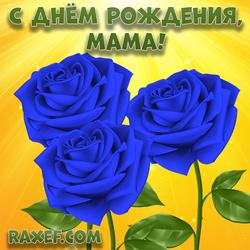 С днем рождения, мама! Открытка с синими розами! Голубые розы!