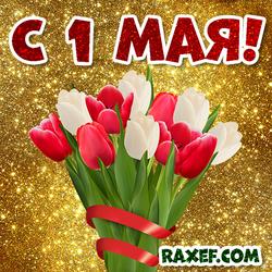 Картинка с 1 мая, день солидарности трудящихся! Открытка с тюльпанами! Тюльпаны!
