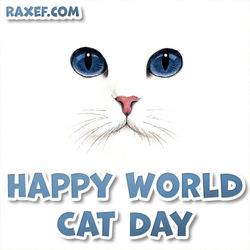 Красивая картинка! С днем кошек! Открытка на день кошек! 8 августа! Белый большой кот!