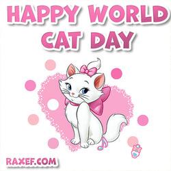 Открытка! День кошек! 8 августа! Праздник! Белая кошка!