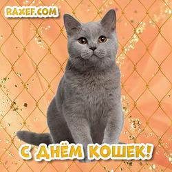 Открытка на день кошек! Кошка! 8 августа!