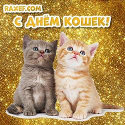 Открытка с днем кошек! На картинке два маленьких котёнка! Скачать открытку можно бесплатно!
