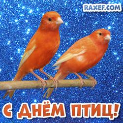 С днем птиц! Открытка с домашними канарейками на день птиц! Канарейки! Открытки на международный день птиц, на 1 апреля!