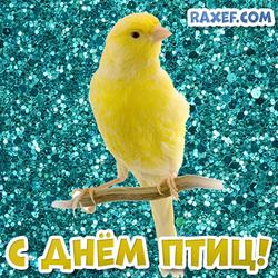 С днем птиц! Открытка с жёлтой канарейкой! Канарейка! Картинка на ярком и блестящем фоне!