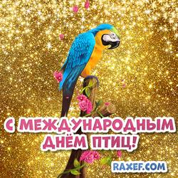 С международным днем птиц! Открытка, картинка! Попугай! Попугайчик!