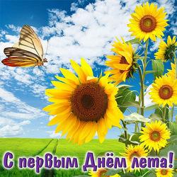 С первым днём лета! Открытка, картинка красивая с подсолнухами! Солнечно, радостно, классно – лето пришло не напрасно.