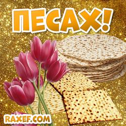 С Песахом! Открытка! Песах! Маца, пресные хлебцы из пшеничной муки! Тюльпаны! Цветы! Картинка на...
