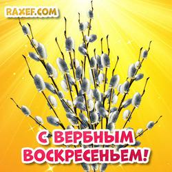 С вербным воскресеньем! Открытка с красивыми веточками вербы! Открытка на русском языке!