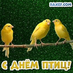 Три канарейки! С днем птиц! Открытка на день птиц! Картинка на зеленом фоне!
