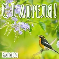 1 апреля! Открытка, картинка с цветами и с птицей! Всем весеннего настроения и счастья!
