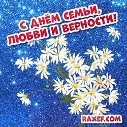 8 июля - День любви, семьи и верности. Открытка, картинка с ромашками! Букет ромашек на красивом фоне!