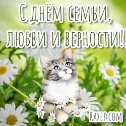 Милая открытка с котиком! Красивая картинка! С днём семьи любви и верности! 8 июля! Праздник! Поздравление с котом и ромашками! Кот! Ромашки!