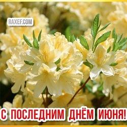 Открытка на 30 июня! Последний день лета! На картинке цветущий жасмин!