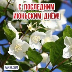 Открытка с чудесными цветками жасмина! Картинка на последний день июня! Последний июньский день! 30 июня!