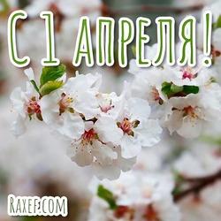 Прекраснейшая открытка на первый день апреля! Картинка с цветами!