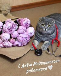 С Днём Медицинского работника! Открытка, картинка с котом! Мурррмяу!