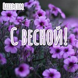 С весной! Открытка! Картинка! Весна! Цветы фиолетовые, сереневые!