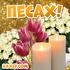 С Песахом! Открытки и поздравления на Песах! Поздравляем с великим праздником Песах, с весной... Страница 1