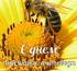 День пасечника, пчеловода